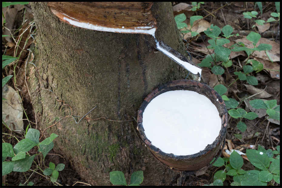 What Is Natural Rubber Made Of